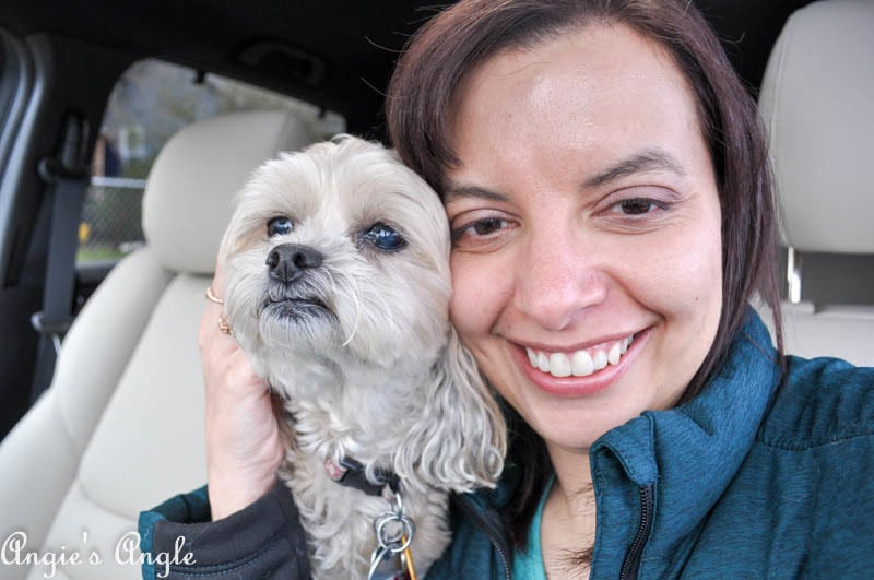 2017 Catch the Moment 365 Week 8 - Day 52 - Roxy and I in the Mazda CX9