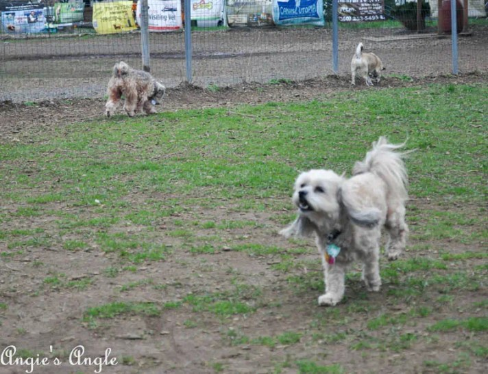 Roxy Has an Adventure to the Dog Park (5)