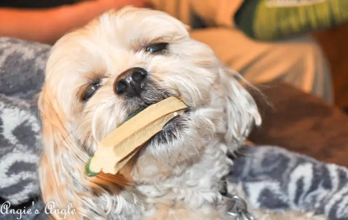 2017 Catch the Moment 365 Week 17 - Day 119 - Roxy and her Peanut Butter Bone (1)