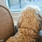 2017 Catch the Moment 365 Week 20 - Day 139 - Watching Outside