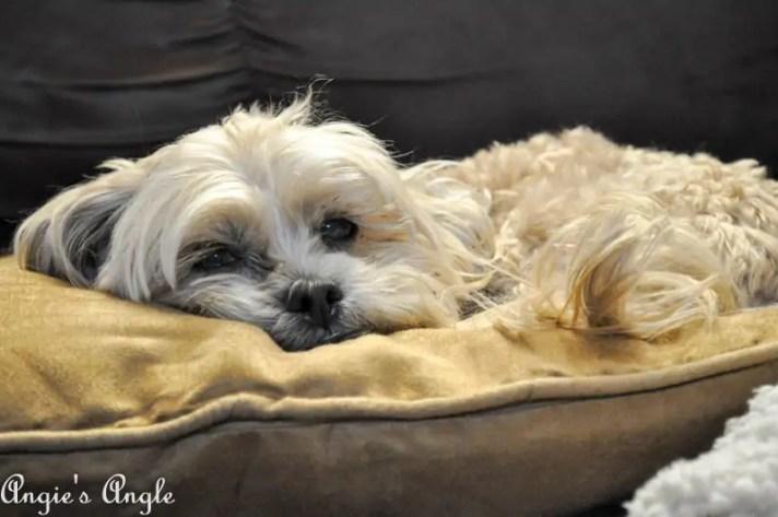 Qi Pillow (1)