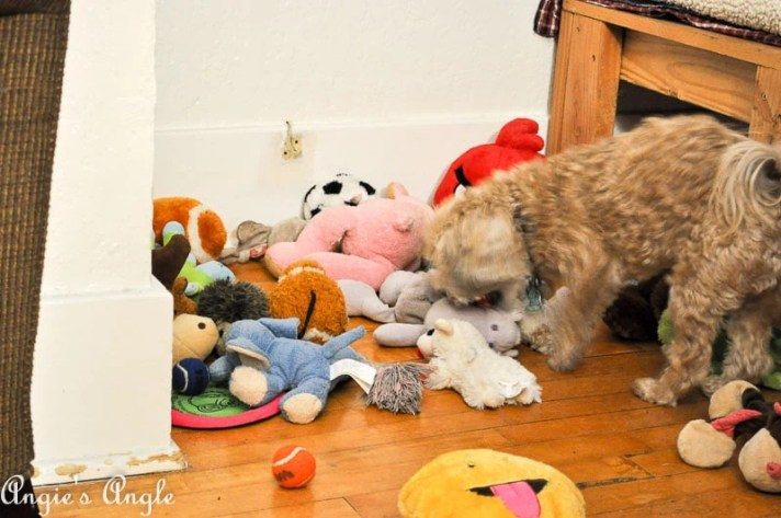 2017 Catch the Moment 365 Week 48 - Day 331 - Roxy Digging Into Her Toys
