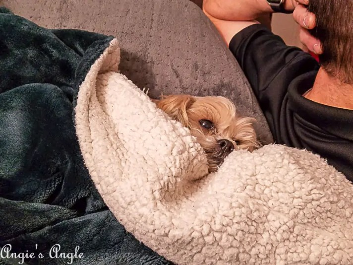 2017 Catch the Moment 365 - Week 52 - Day 352 - Cuddled Roxy