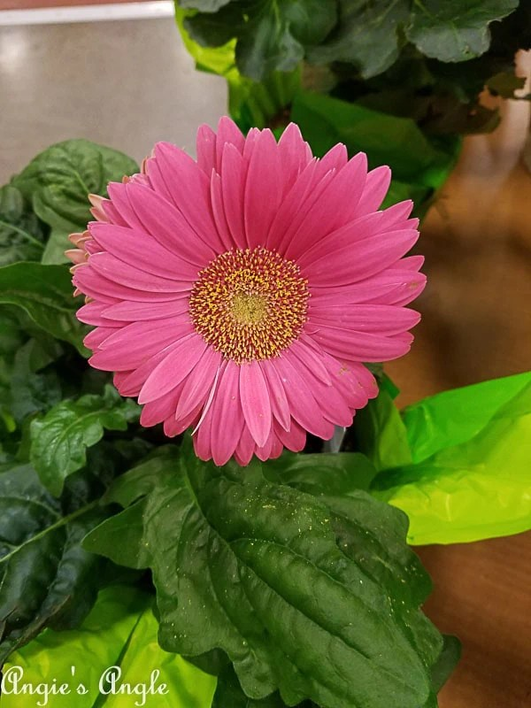 2018 Catch the Moment 365 Week 3 - Day 21 - Pretty Flower at Fred Meyer