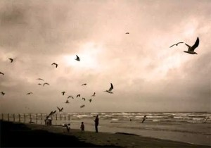beach with gulls 300x2101 Escape