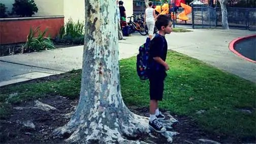 nicholas and tree The Full Circle Tree