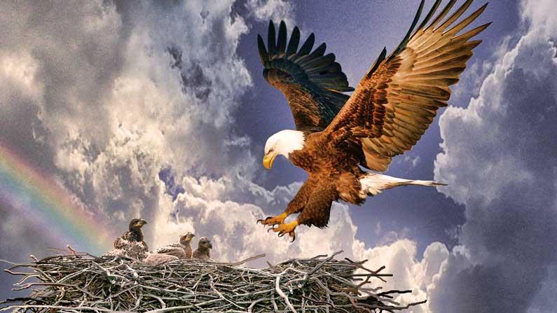 eagles-nest