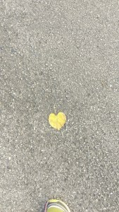 heart leaf notice what is right there