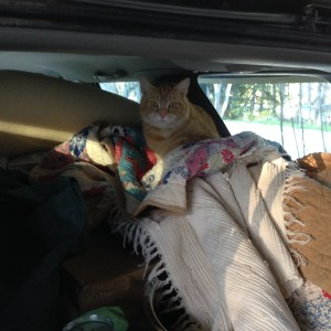 Traveling cat