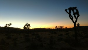 Evening Joshua Tree National Park