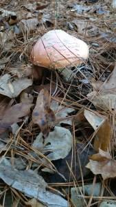 mushroom in the foresy
