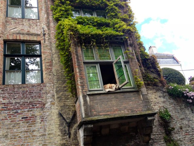 Dog in the window