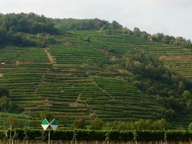 Wachau vineyards, Austria