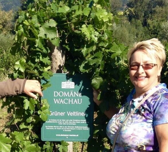 Wachau, Austria, vineyards