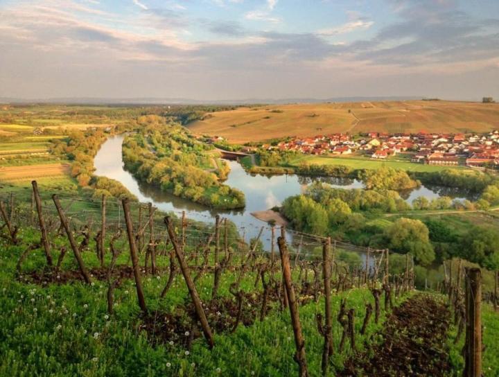 Volkach vineyards