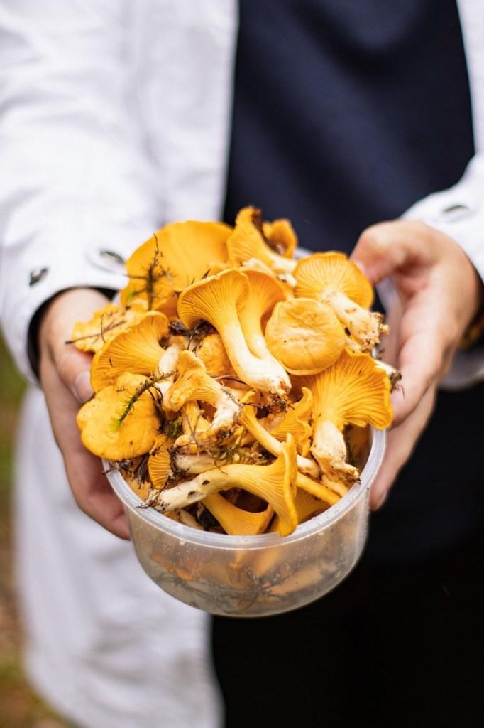 Chanterelle Mushrooms, Pfifferlinge