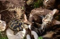 Cuddling with tortoises
