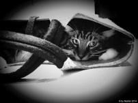 Cat trap: bag