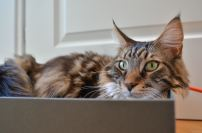 caught in the box