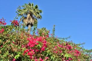 flowersoverflowers
