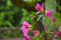 flowersoverflowers (2)