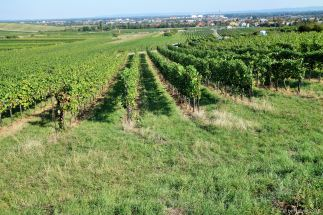 wine-wandering (1)