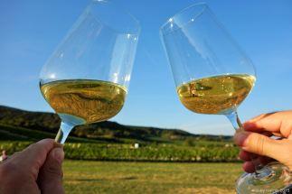 wine-wandering (5)
