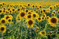 flowersoverflowers (8)