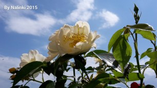 flowersiverflowers (1)