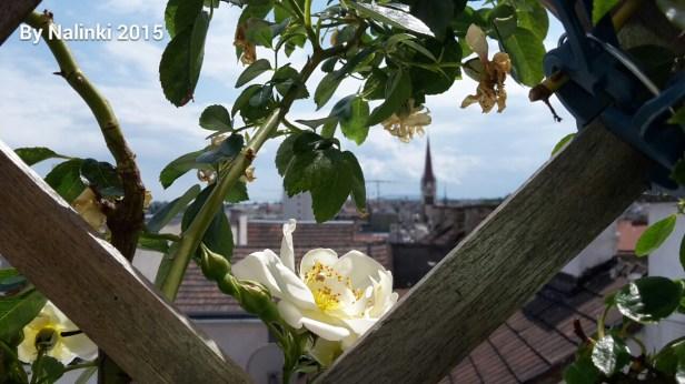 flowersiverflowers (3)