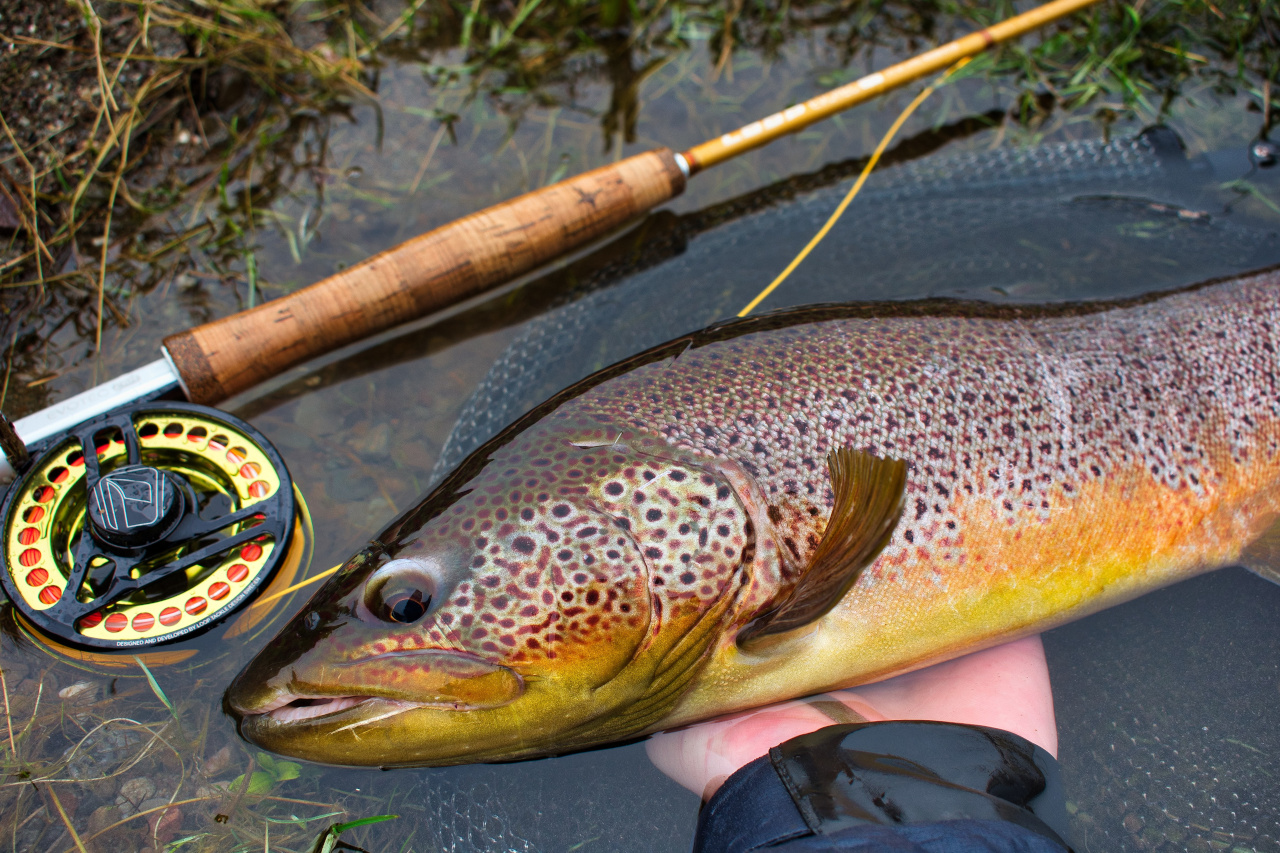 brown trout caught on guided fly fishing trip