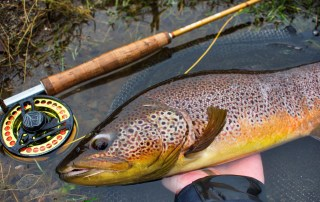 a brown trout caught on guided fly fishing trip