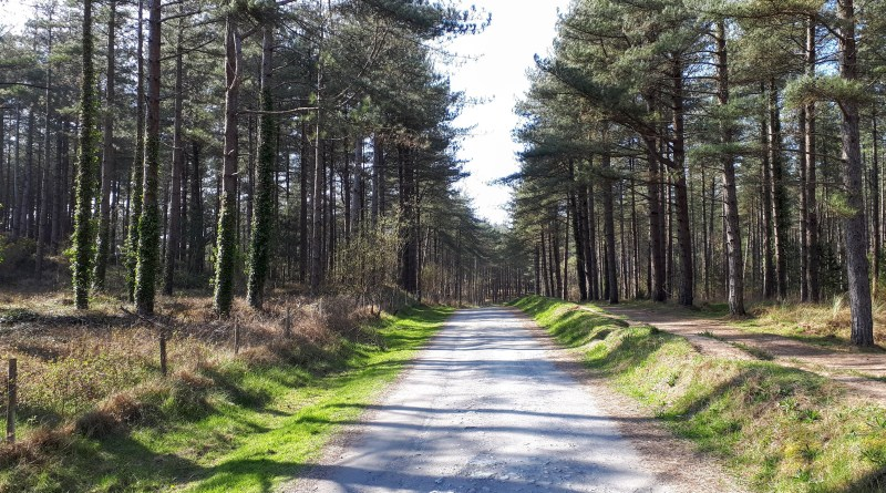 A picture of a path through Newborough Forest