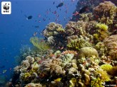 80_the_tubbataha_reefs_by_lory_tan_resize