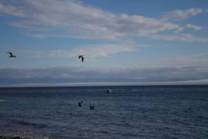 B.C. Birds (Victoria)