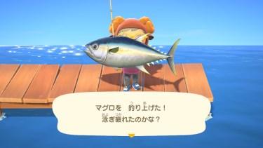 【あつまれ どうぶつの森】4月から出現する魚・虫や大会の開催日など!