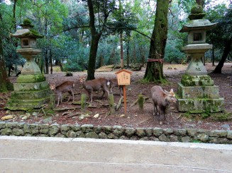 Nara's known for its deer, which supposedly will bow to you (one of them sort of did). Mostly they want food. And are adorable.