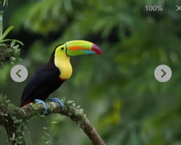 Image Gallery With Angular 2