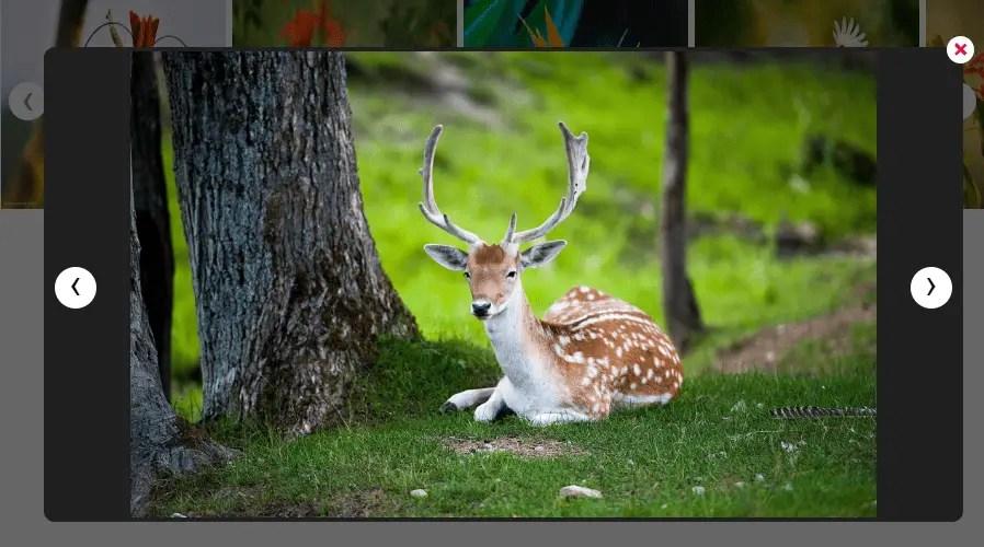 Image Slider With Lightbox For Angular 6+