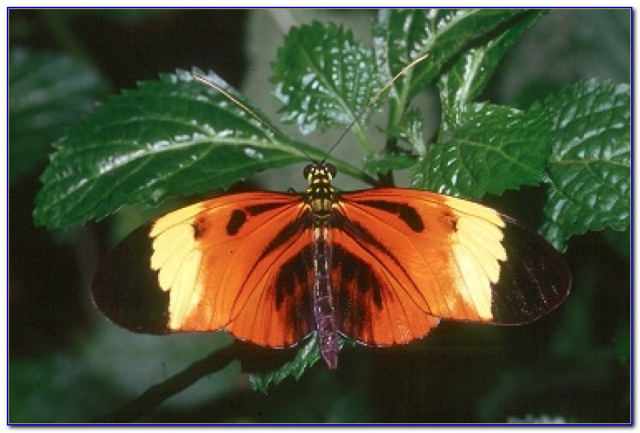 Audubon Butterfly Garden And Insectarium Hours