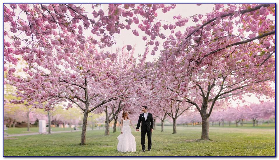 Brooklyn Botanical Garden Wedding Pictures