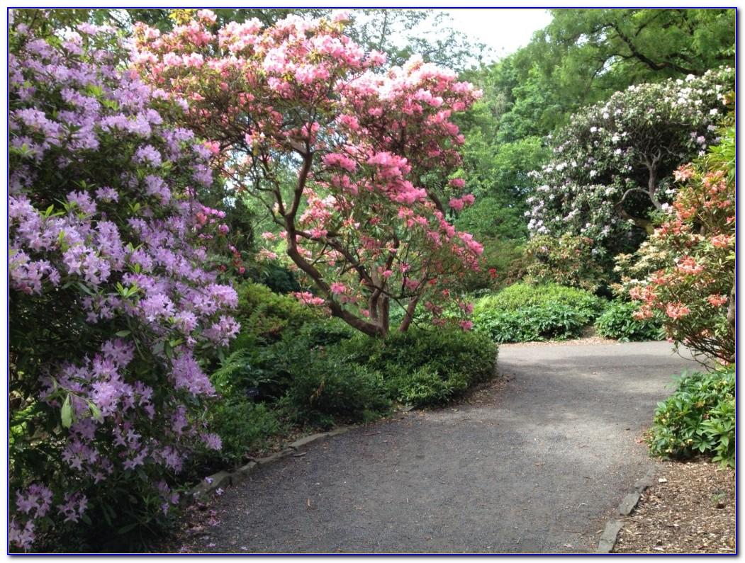 Crystal Springs Rhododendron Garden Fall