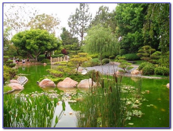 Earl Burns Miller Japanese Garden Admission
