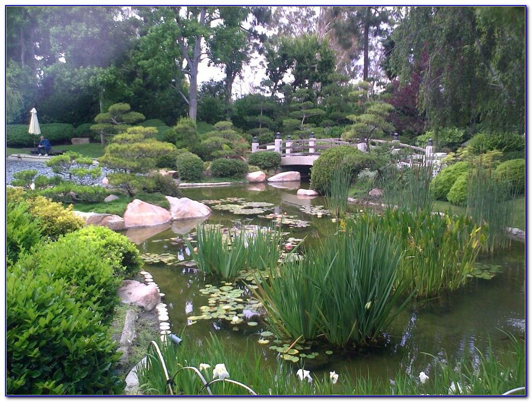 Earl Burns Miller Japanese Garden Long Beach