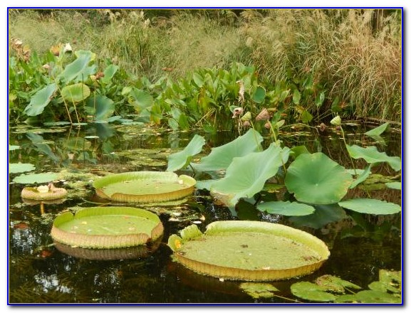 San Diego Botanical Gardens Coupon