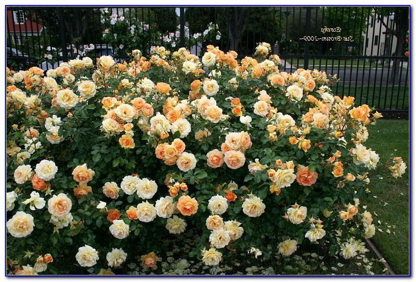 San Jose Municipal Rose Garden Directions