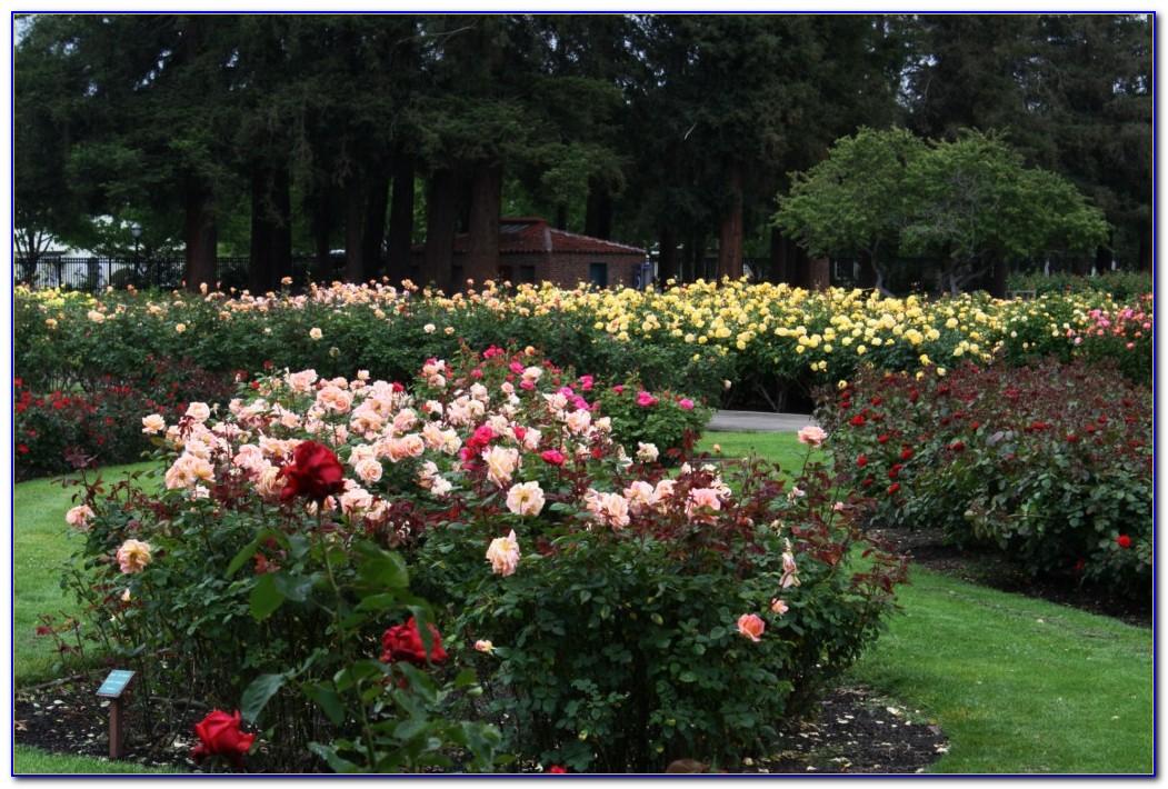 San Jose Municipal Rose Garden Fee