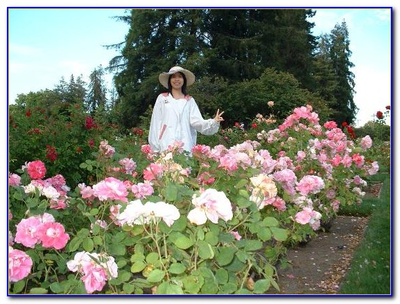 San Jose Municipal Rose Garden Ticket