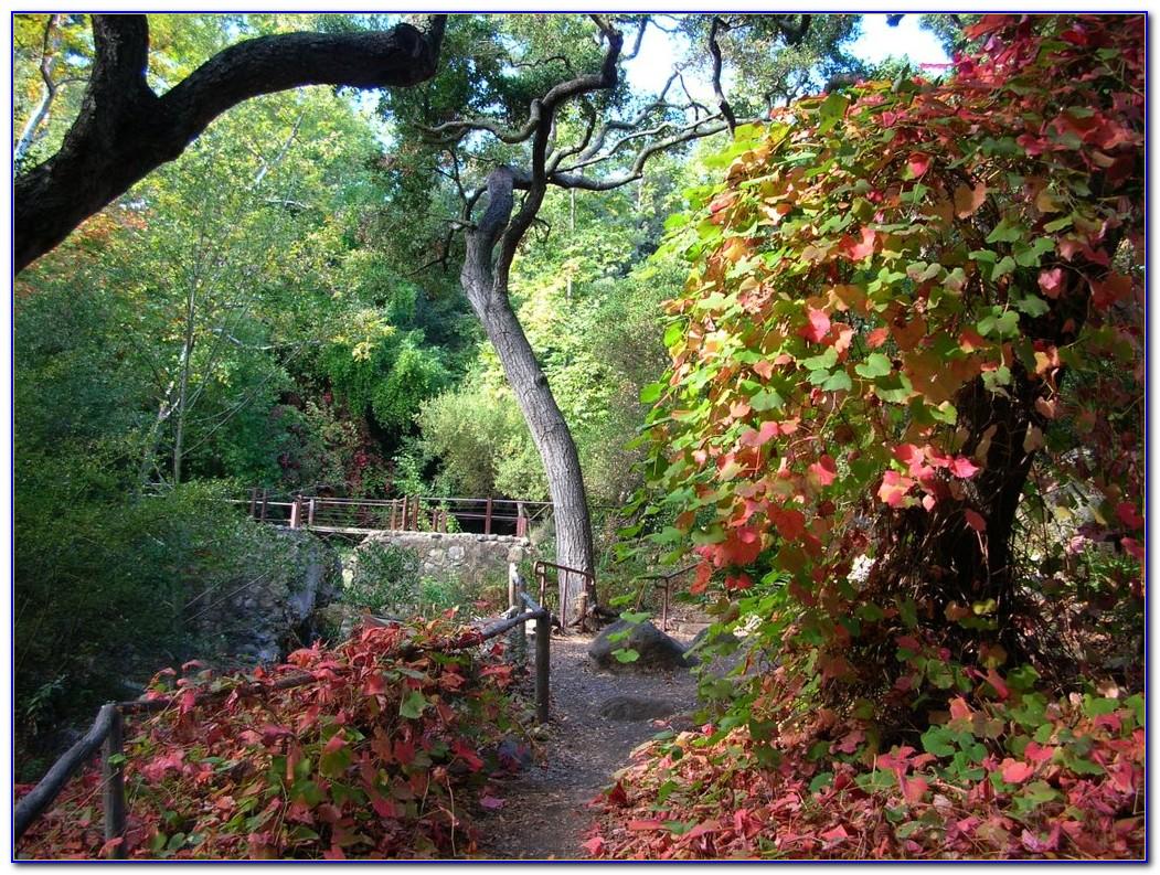 Santa Barbara Botanic Garden Hours