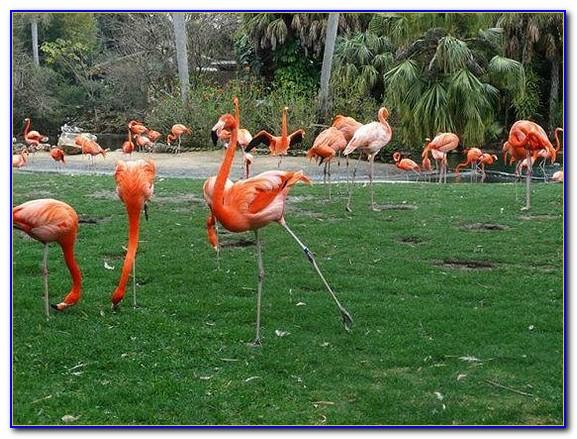 Busch Gardens Florida Resident Day Pass